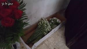 florescamerin2